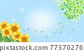 sunflower, sunflowers, summer 77370276