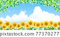 sunflower, sunflowers, summer 77370277