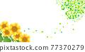 sunflower, sunflowers, summer 77370279