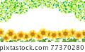 sunflower, sunflowers, summer 77370280