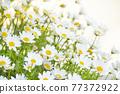 花 自然 春天 77372922