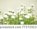 花 自然 春天 77372923