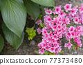 花 花粉 盆栽植物 77373480