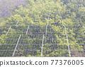 太陽能發電 太陽能 光伏 77376005