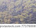 太陽能發電 太陽能 光伏 77376008