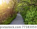 Shoreline Trail, Port Moody, Greater Vancouver, British Columbia, Canada 77383050