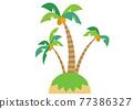 棕櫚樹 77386327