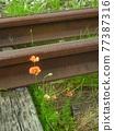 rail, rails, railroad 77387316