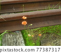 rail, rails, railroad 77387317