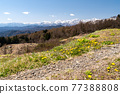 northern alps, mountain, spring 77388808