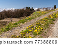 field, bloom, blossom 77388809