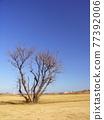 nature, natural, naturals 77392006