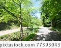 tender green, verdure, promenade 77393043