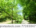 tender green, verdure, promenade 77393047