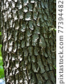 tree trunk, trunk, feel of a material 77394482