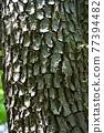 樹幹 質感 質地 77394482