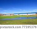 river bed, edo river, spring 77395376