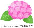 수국 (핑크) 77404371