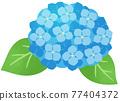 수국 (블루) 77404372
