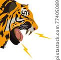 老虎 虎 動物 77405089