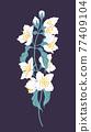 Simple Jasmine Branch Isolated on Dark Background 77409104