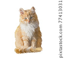Fluffy red cat isolated on white background. Digital illustration. 77413031