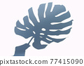 Shadow of hand with monstera plant leaves 77415090