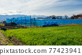 farm at central alps mountain, Matsumoto 77423941