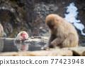 Snow monkey bath on hot spring in winter 77423948