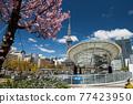 Oasis21 and tv tower with sakura tree, Nagoya 77423950
