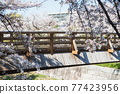 White sakura at wooden bridge Yamazaki river, Nagoya 77423956