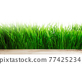 Green grass isolated on white 77425234