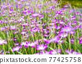 花朵 花 花卉 77425758