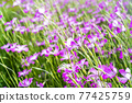 花朵 花 花卉 77425759