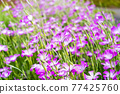 花朵 花 花卉 77425760