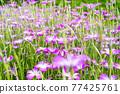 花朵 花 花卉 77425761