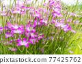 花朵 花 花卉 77425762