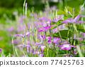 花朵 花 花卉 77425763