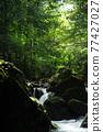 Fresh green valley 77427027