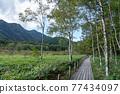 自然 風景 濕地 77434097