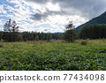 自然 風景 日光 77434098