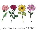 花朵 花 花卉 77442616