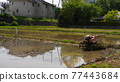 rice planting, paddy field, rice field 77443684