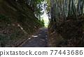 machida, avenues, path 77443686