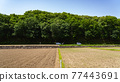 paddy field, rice field, paddy 77443691