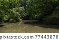pond, lagoon, waterfront 77443878