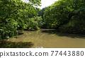 pond, lagoon, waterfront 77443880