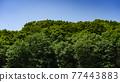 Summer forest 77443883