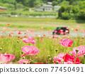 花朵 花 花卉 77450491