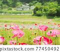 花朵 花 花卉 77450492